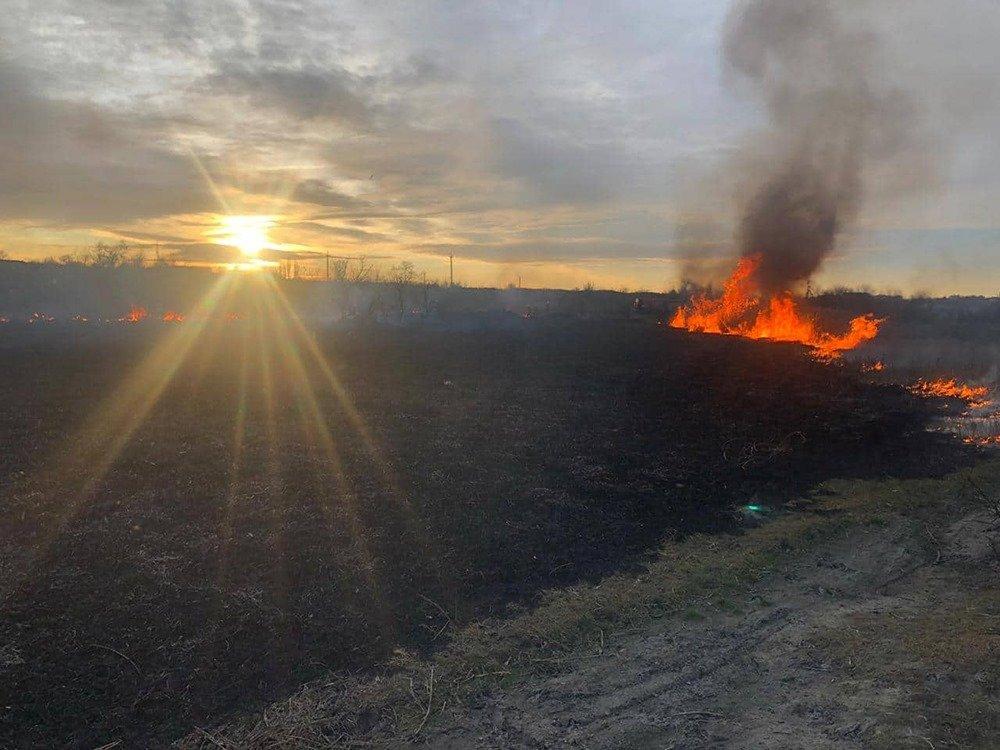 На Николаевщине из-за поджогов горело 5 гектаров камыша, - ФОТО, ВИДЕО, фото-5