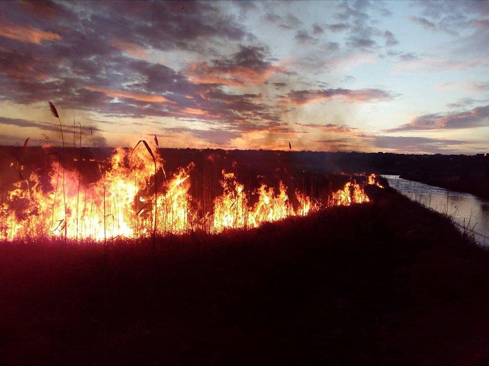 На Николаевщине из-за поджогов горело 5 гектаров камыша, - ФОТО, ВИДЕО, фото-4