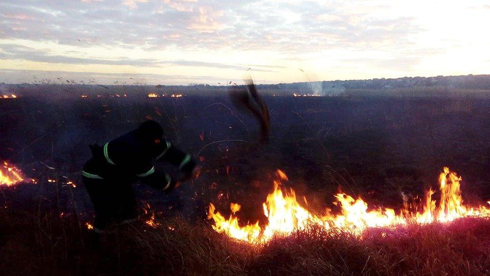На Николаевщине из-за поджогов горело 5 гектаров камыша, - ФОТО, ВИДЕО, фото-3