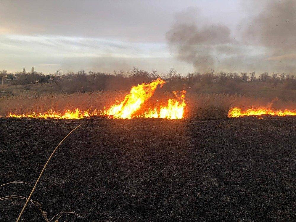 На Николаевщине из-за поджогов горело 5 гектаров камыша, - ФОТО, ВИДЕО, фото-1