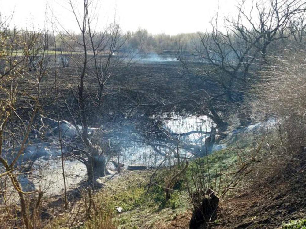 В Николаевской области за сутки семь раз загорался сухостой, - ФОТО, фото-3