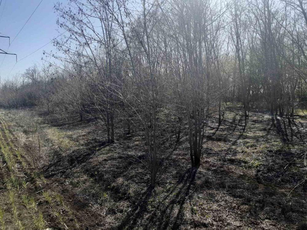 В Николаевской области за сутки семь раз загорался сухостой, - ФОТО, фото-6