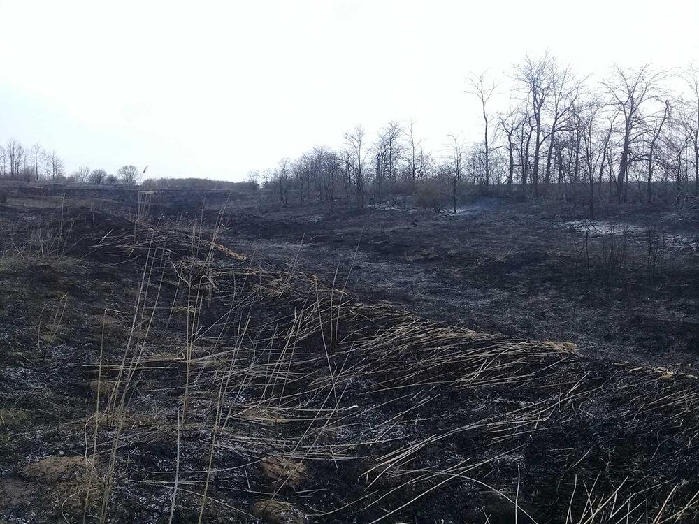 В Николаевской области за сутки семь раз загорался сухостой, - ФОТО, фото-10