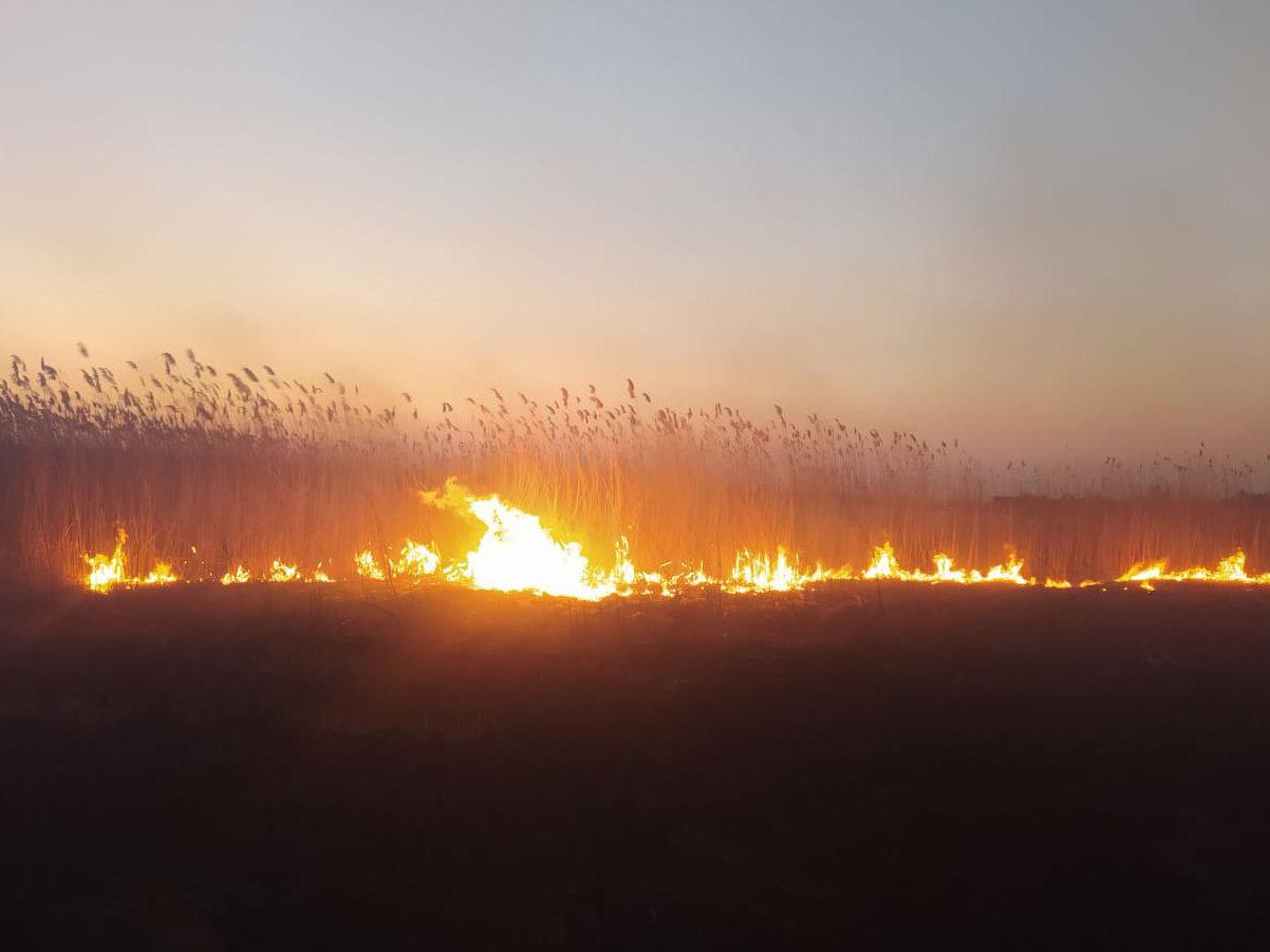 На Николаевщине продолжает гореть камыш и трава: подозревают поджоги, - ФОТО, фото-1