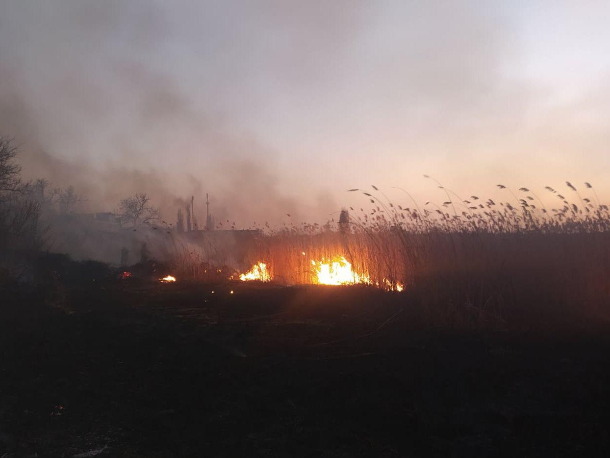 На Николаевщине продолжает гореть камыш и трава: подозревают поджоги, - ФОТО, фото-2