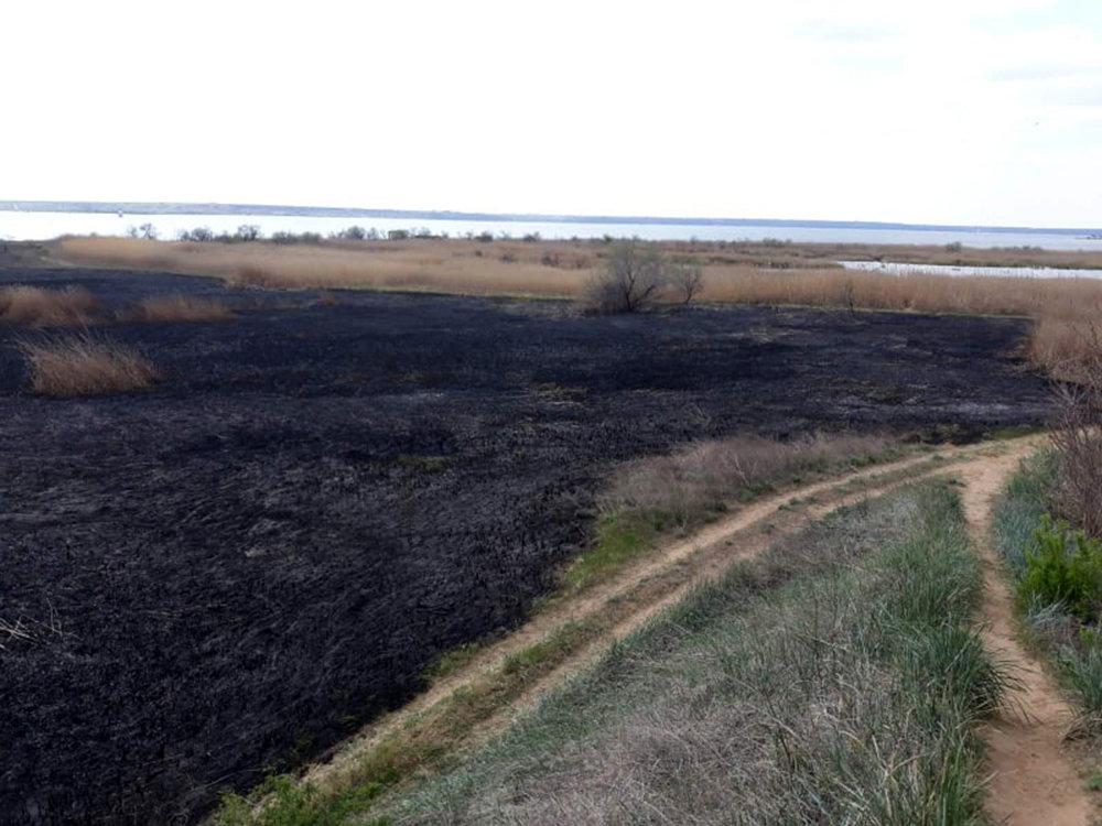В селе Лиманы, что на Николаевщине, выгорело 4 гектара камыша, - ФОТО, ВИДЕО, фото-2
