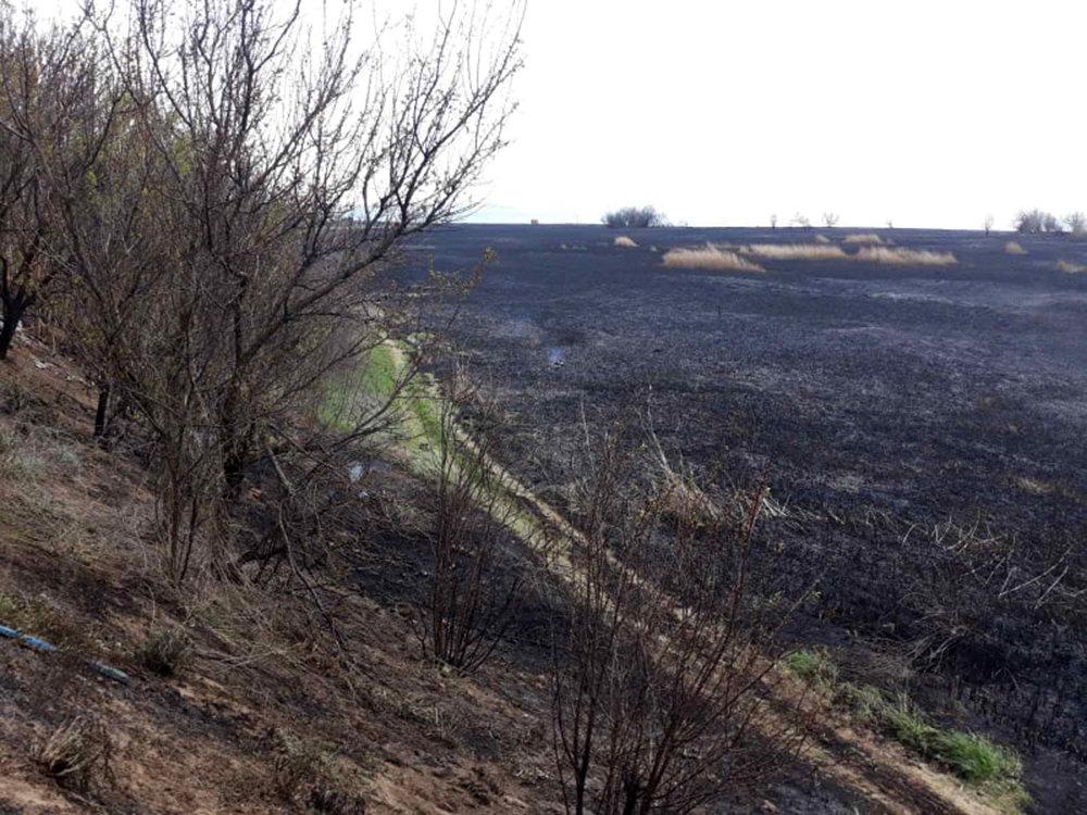 В селе Лиманы, что на Николаевщине, выгорело 4 гектара камыша, - ФОТО, ВИДЕО, фото-4