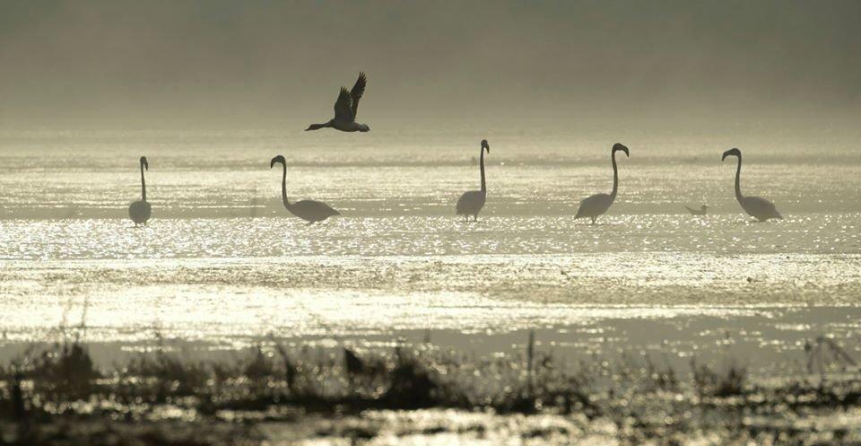 На Николаевщину впервые прилетели розовые фламинго, - ФОТО, фото-1