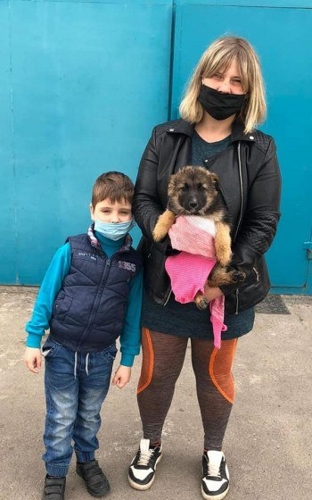 За месяц 32 собаки из центра защиты животных Николаева нашли себе хозяев, - ФОТО, фото-2