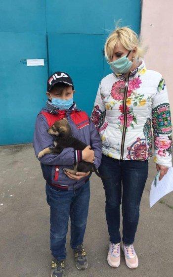 За месяц 32 собаки из центра защиты животных Николаева нашли себе хозяев, - ФОТО, фото-3