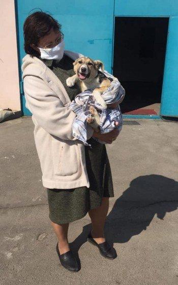 За месяц 32 собаки из центра защиты животных Николаева нашли себе хозяев, - ФОТО, фото-4