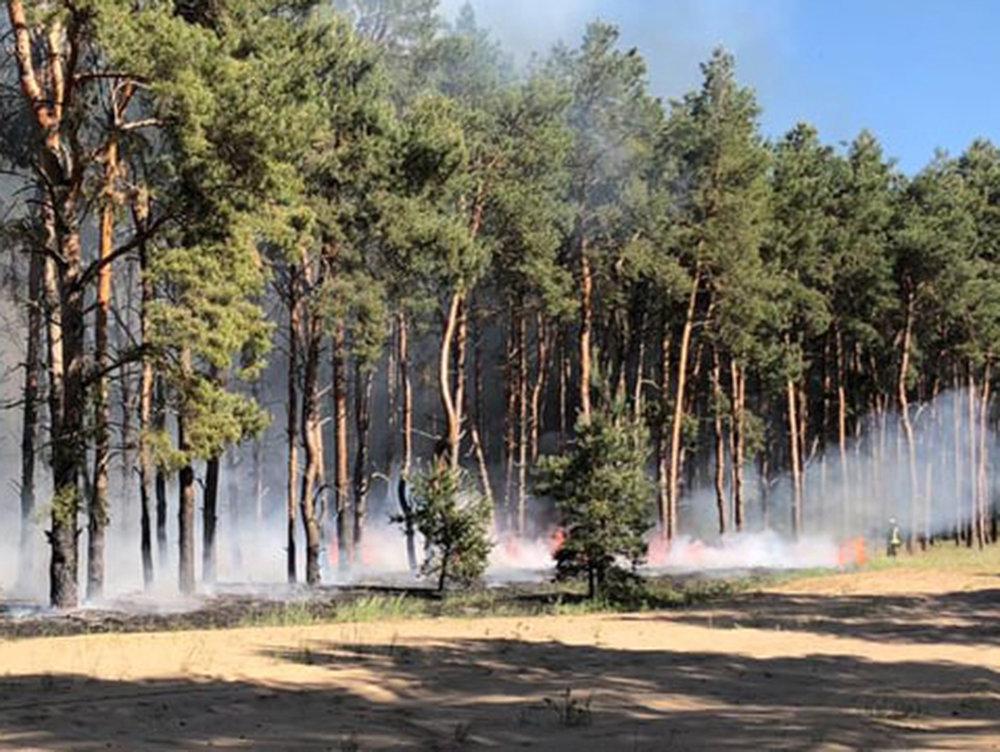 За сутки три лесничества Николаевщины горели из-за поджогов, - ФОТО, фото-4