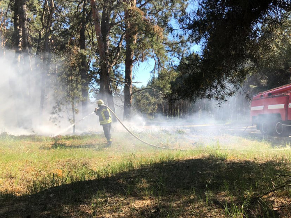 За сутки три лесничества Николаевщины горели из-за поджогов, - ФОТО, фото-1