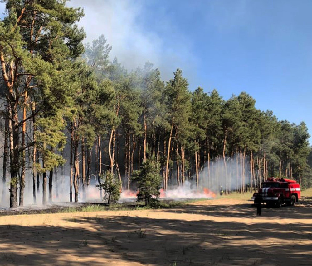 За сутки три лесничества Николаевщины горели из-за поджогов, - ФОТО, фото-3