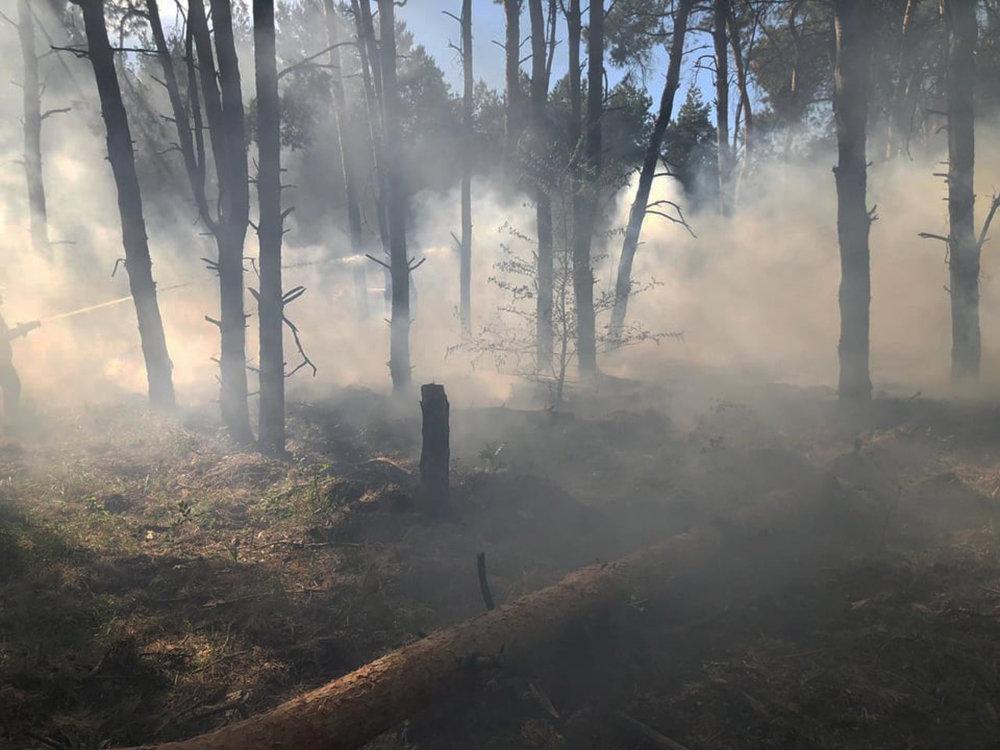 За сутки три лесничества Николаевщины горели из-за поджогов, - ФОТО, фото-2