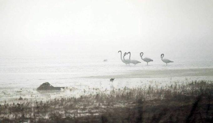 """""""Поиск спокойствия"""": орнитологи постарались объяснить прилет фламинго на Николаевщину, - ФОТО, фото-1"""