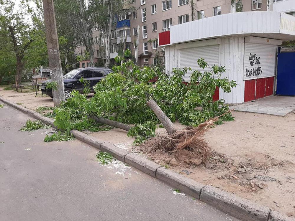 Из-за сильных порывов ветра в Николаеве деревья упали на детскую площадку, - ФОТО, фото-1
