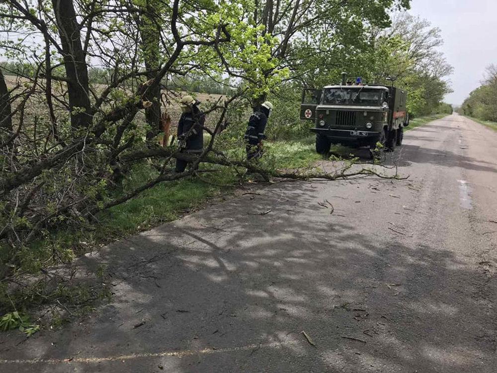 Из-за сильных порывов ветра в Николаеве деревья упали на детскую площадку, - ФОТО, фото-2
