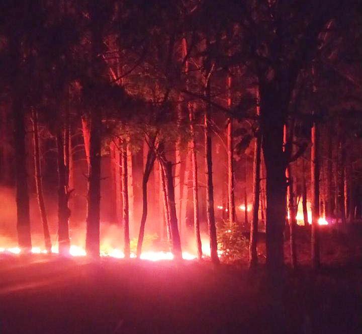 В Николаеве подожгли Балабановский лес, - ФОТО, фото-1