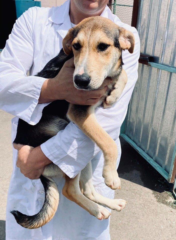 """""""Пора домой"""": очаровательные собаки ждут своего """"усыновления"""" николаевцами, - ФОТО, фото-1"""