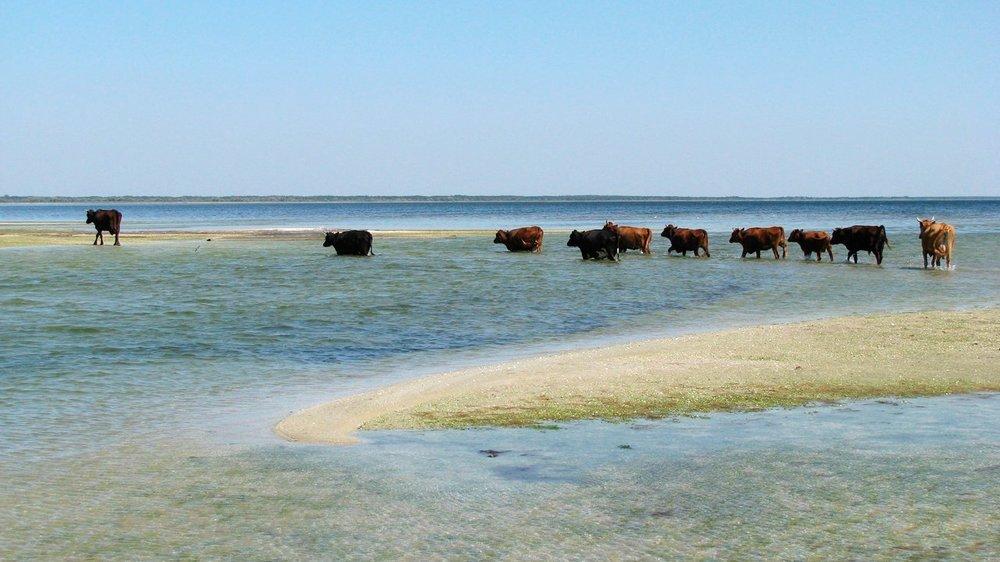 Лучше Турции: где отдохнуть на море в пределах Николаевщины , фото-10