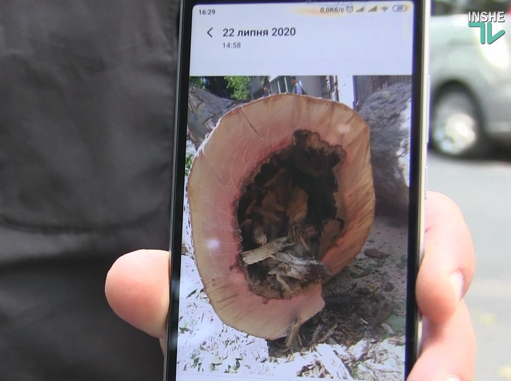 В Николаеве спилили живые деревья по документам гнилых, - ВИДЕО, фото-15