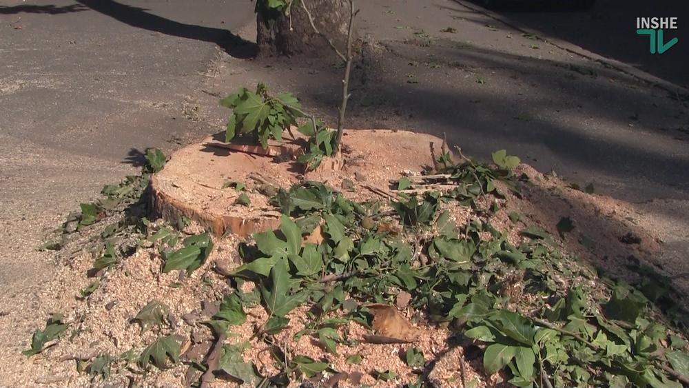 В Николаеве спилили живые деревья по документам гнилых, - ВИДЕО, фото-8