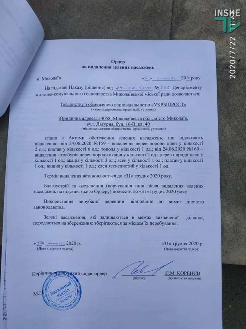 В Николаеве спилили живые деревья по документам гнилых, - ВИДЕО, фото-4