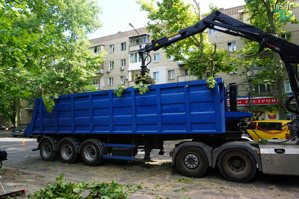 В Николаеве спилили живые деревья по документам гнилых, - ВИДЕО, фото-16