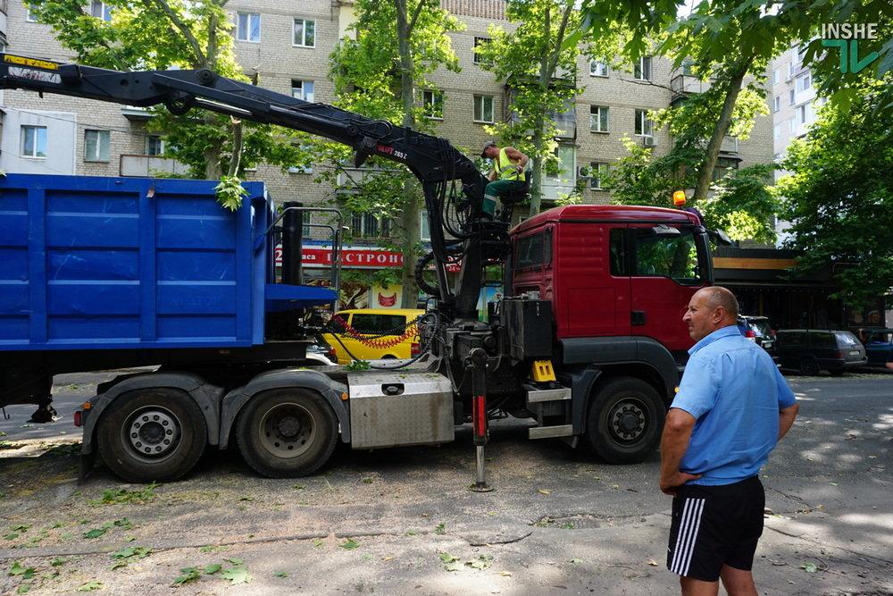 В Николаеве спилили живые деревья по документам гнилых, - ВИДЕО, фото-10