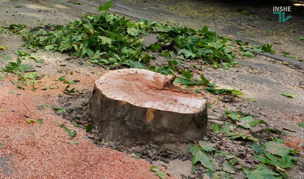 В Николаеве спилили живые деревья по документам гнилых, - ВИДЕО, фото-7