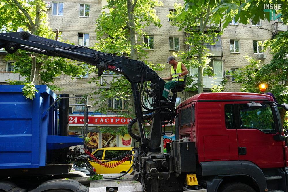 В Николаеве спилили живые деревья по документам гнилых, - ВИДЕО, фото-9