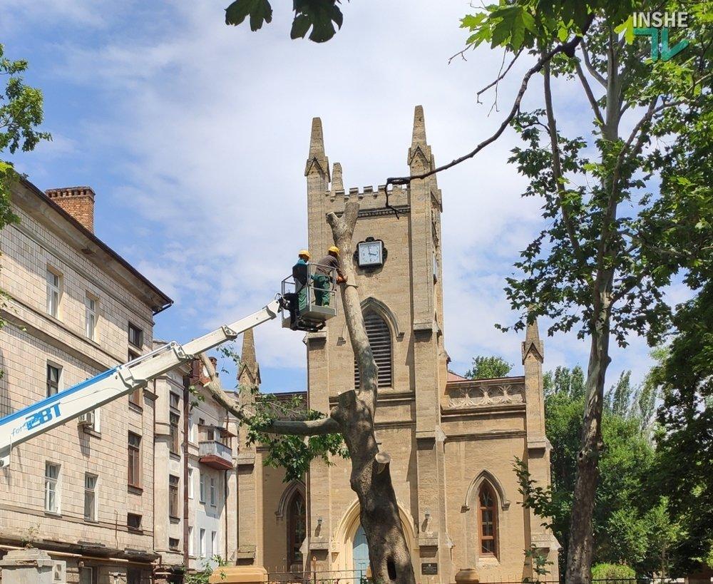 В Николаеве спилили живые деревья по документам гнилых, - ВИДЕО, фото-2