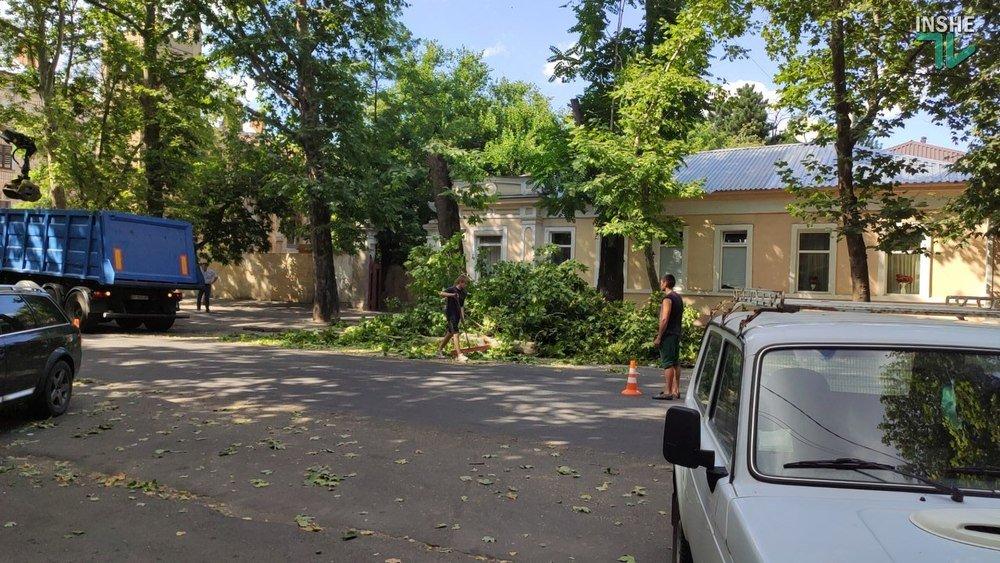 В Николаеве спилили живые деревья по документам гнилых, - ВИДЕО, фото-11