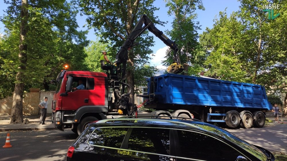 В Николаеве спилили живые деревья по документам гнилых, - ВИДЕО, фото-14