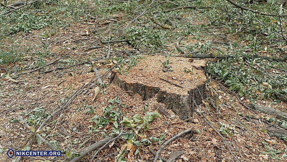 В Николаеве уничтожили 38 здоровых деревьев, чтобы освободить территорию для скейт-парка, - ФОТО, фото-2