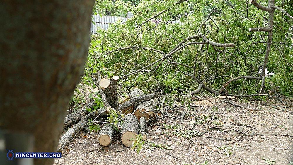 В Николаеве уничтожили 38 здоровых деревьев, чтобы освободить территорию для скейт-парка, - ФОТО, фото-3