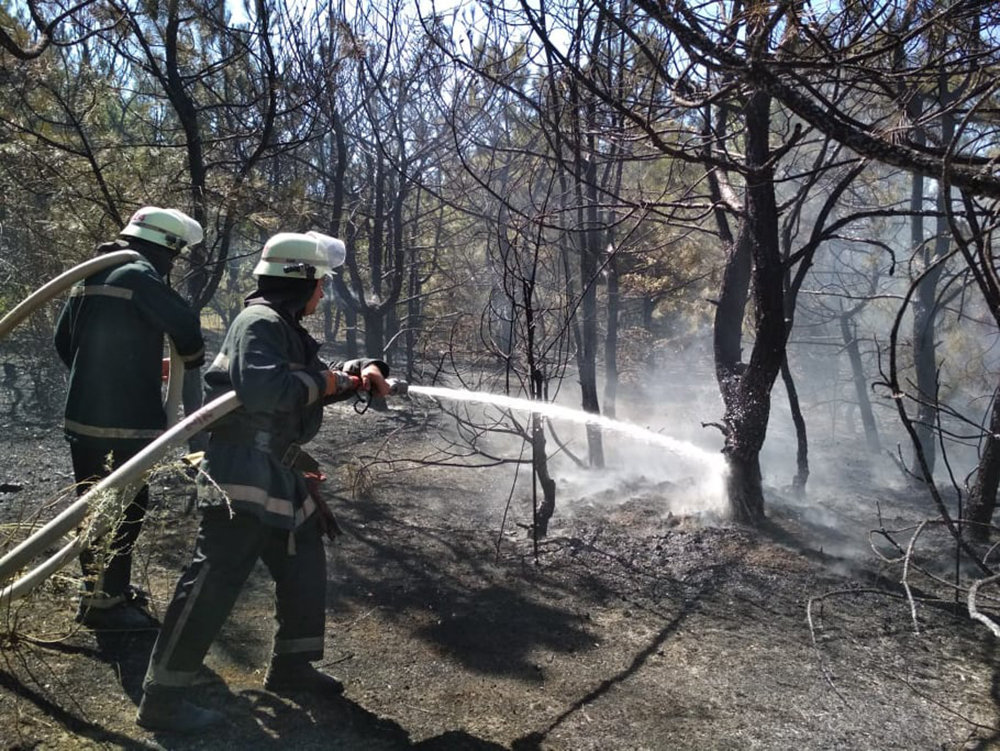 На Николаевщине в течении суток подожгли два леса, - ФОТО, фото-3