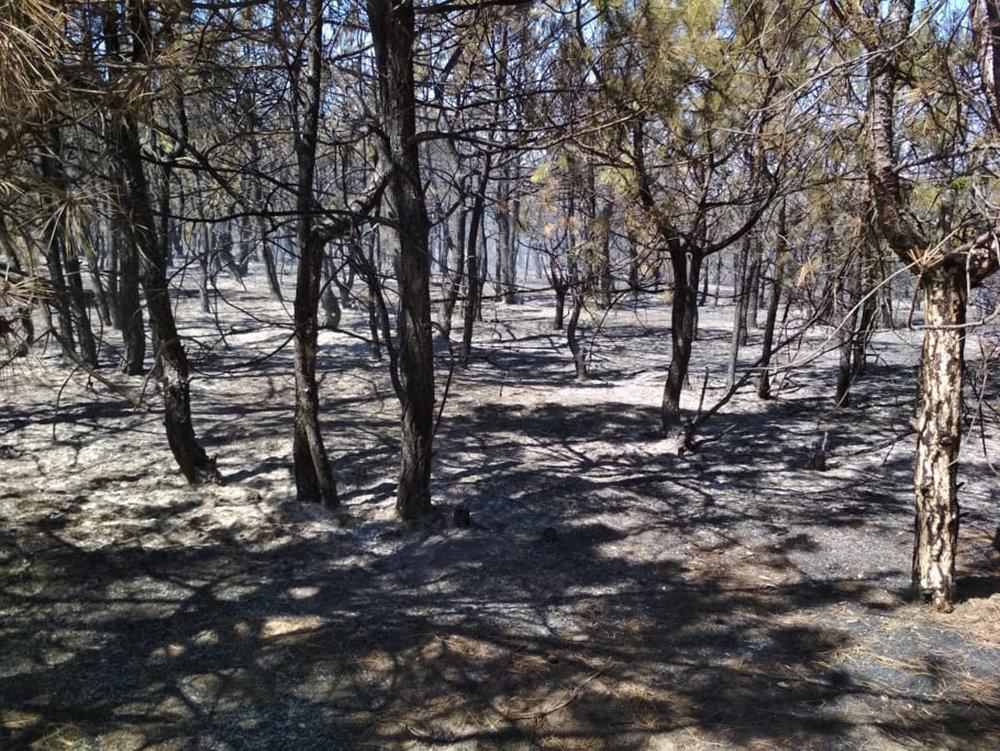 На Николаевщине в течении суток подожгли два леса, - ФОТО, фото-2