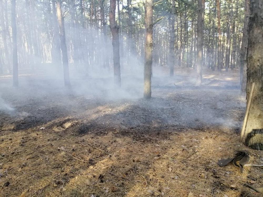 На Николаевщине в течении суток подожгли два леса, - ФОТО, фото-1