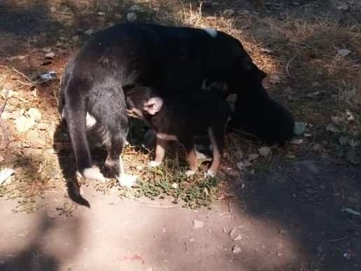 На Николаевщине спасатели достали из колодца щенка, - ФОТО, фото-1