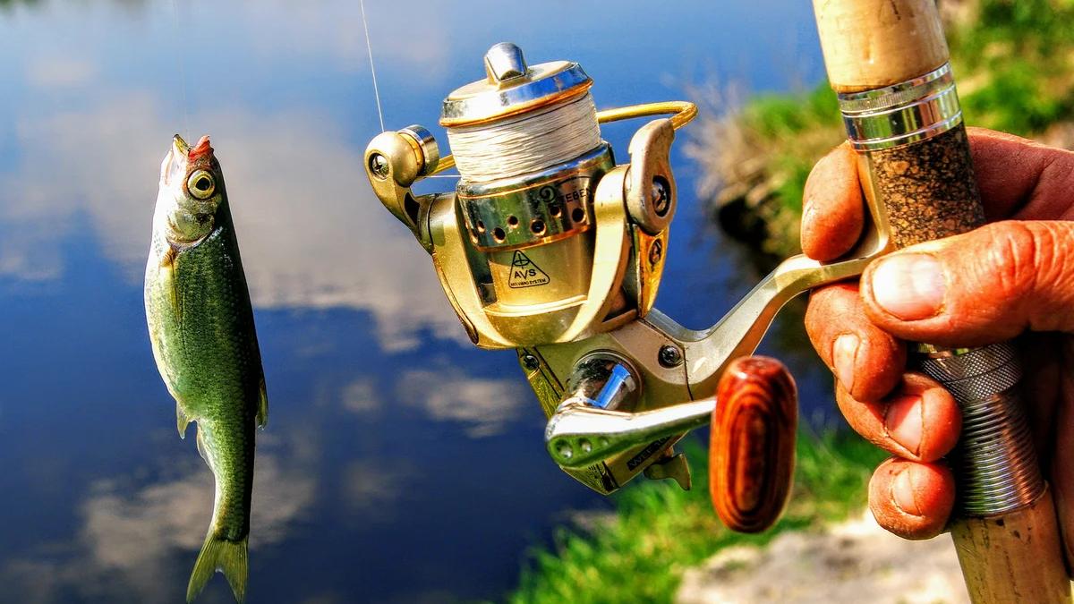 Памятка начинающему николаевскому рыбаку: когда можно ловить и чем именно, - ФОТО, фото-1