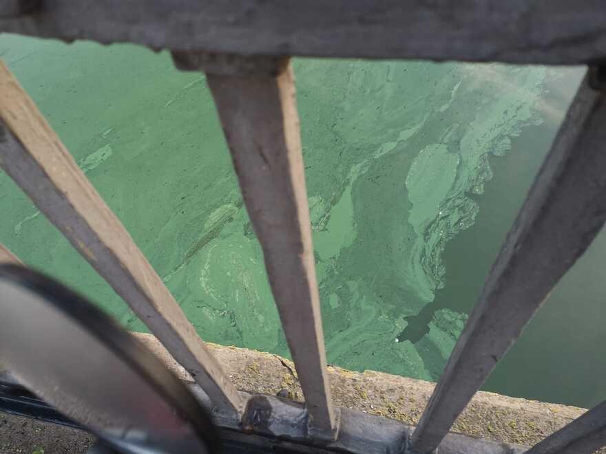В Николаеве показали фото позеленевших Ингула и Южного Буга , фото-4