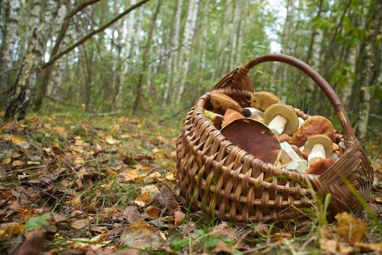 Отдых в Николаеве, Поездка за грибами