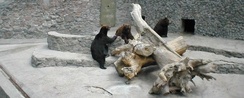 Медведи-долгожители николаевского зоопарка отпраздновали свой день рождения, - ФОТО, фото-5