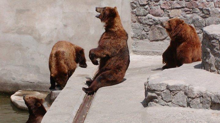 Медведи-долгожители николаевского зоопарка отпраздновали свой день рождения, - ФОТО, фото-4