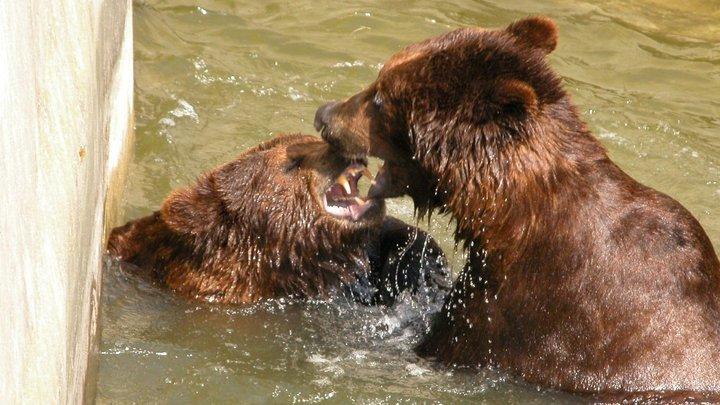 Медведи-долгожители николаевского зоопарка отпраздновали свой день рождения, - ФОТО, фото-3