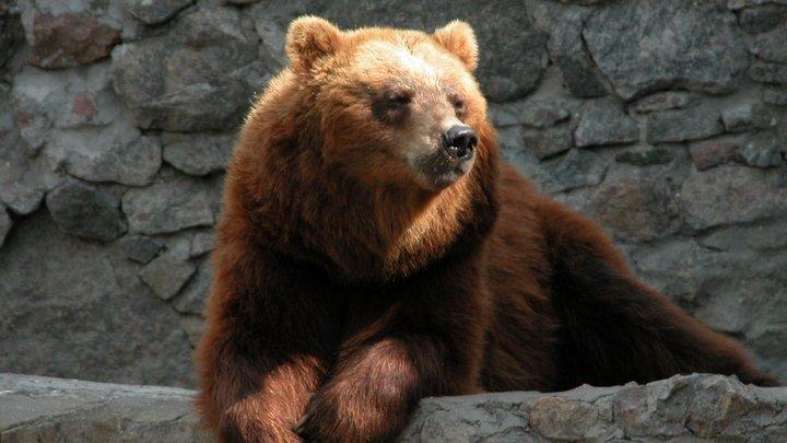 Медведи-долгожители николаевского зоопарка отпраздновали свой день рождения, - ФОТО, фото-2
