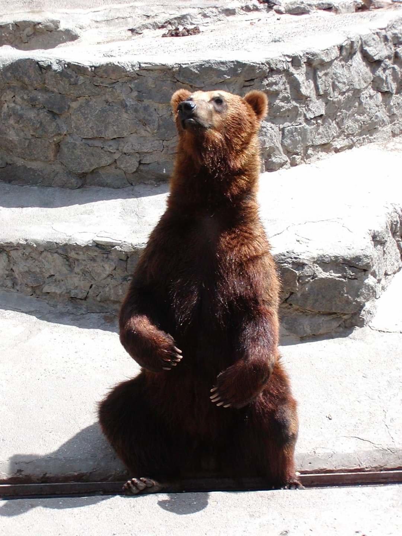 Медведи-долгожители николаевского зоопарка отпраздновали свой день рождения, - ФОТО, фото-6