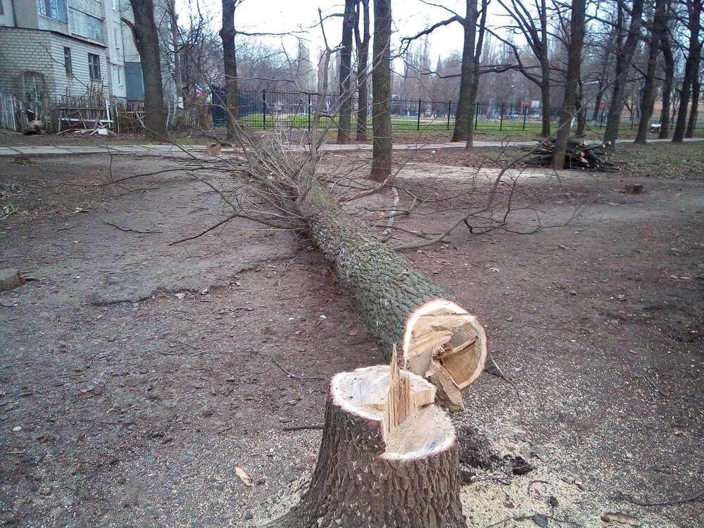 """В Николаеве срубили деревья, Срубили деревья в сквере """"Николаевский"""""""